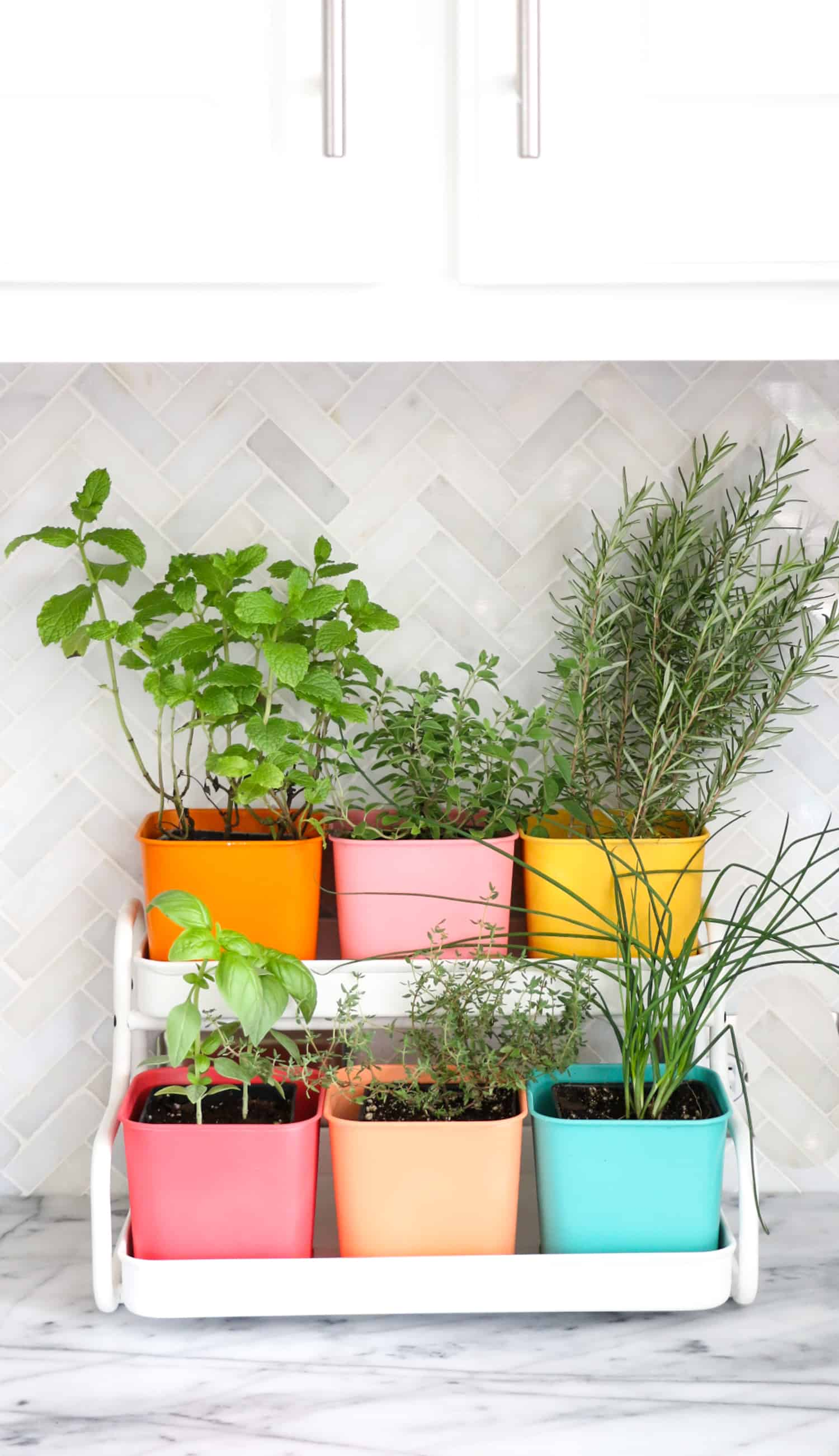 Make-a-Colorful-Indoor-Herb-Garden-click-through-for-tutorial-_4