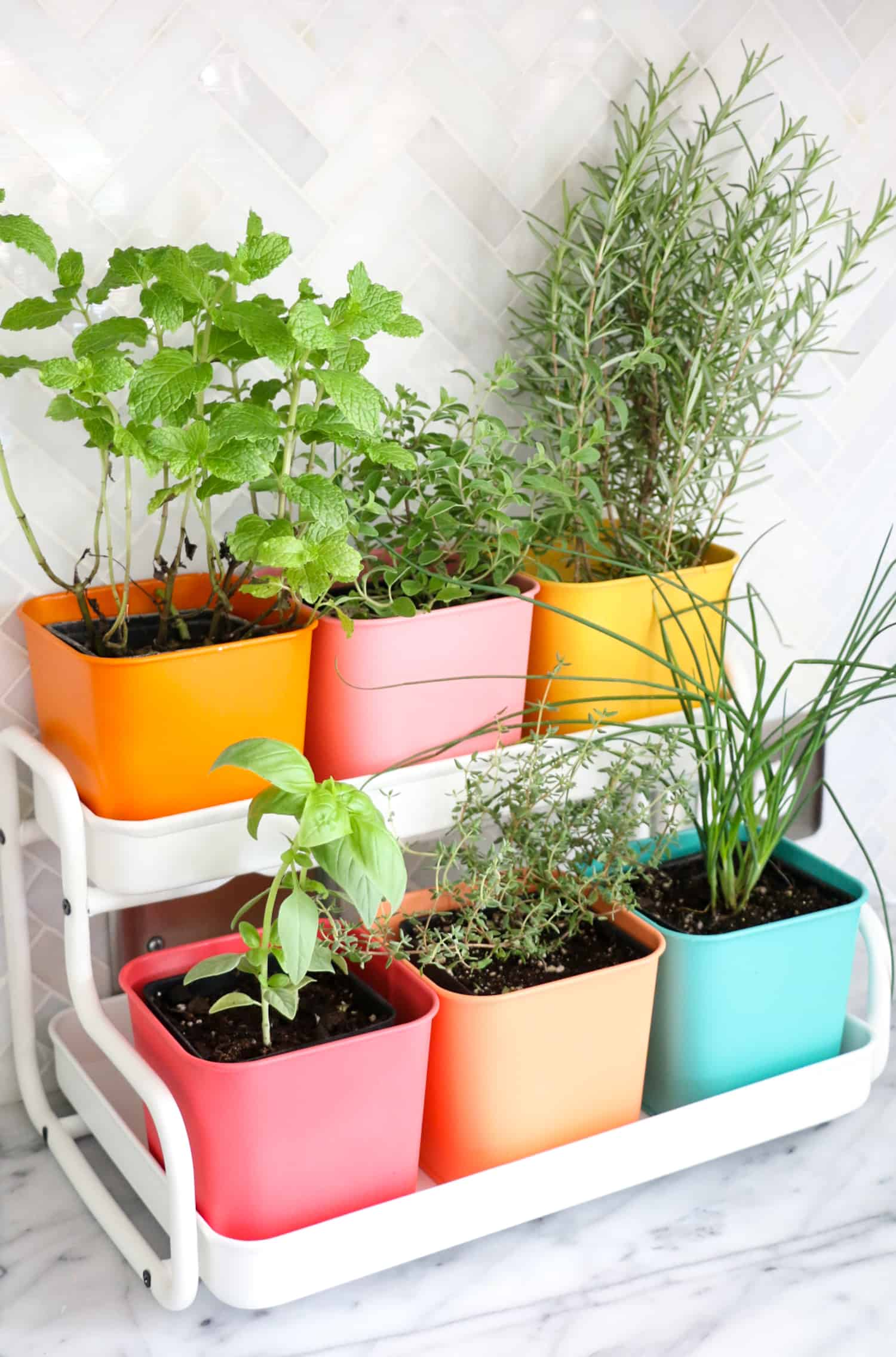 Make-a-Colorful-Indoor-Herb-Garden-click-through-for-tutorial_