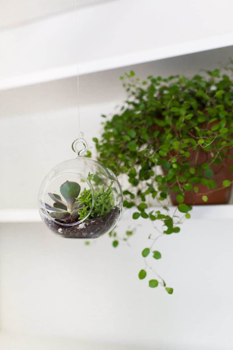 Make Your Own Floating Terrariums A Beautiful Mess