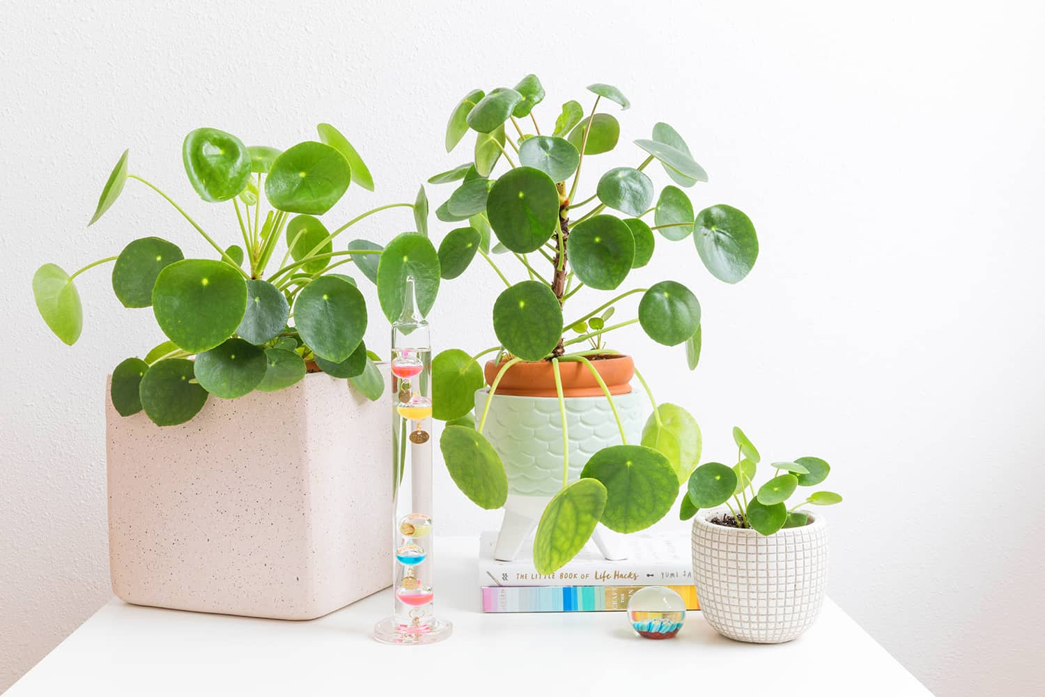 Caring for Pilea Plants - A Beautiful Mess