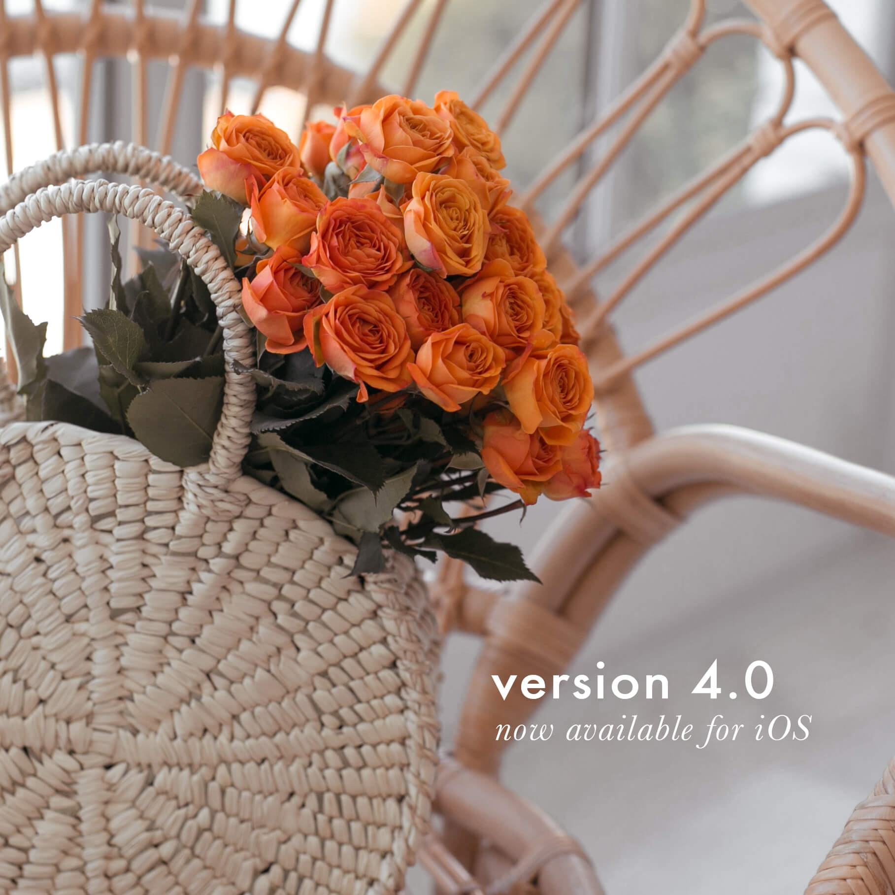 A Color Story 4.0 For iOS Is Here!!