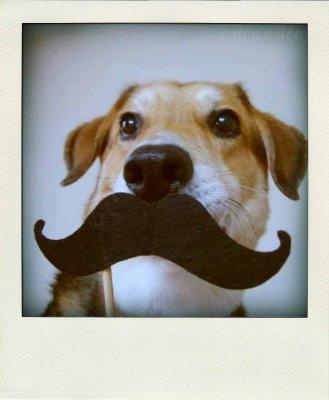 Dog-mustache