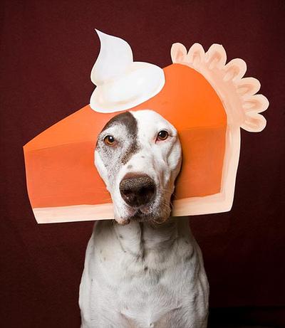 Pumpkin-pie-dog