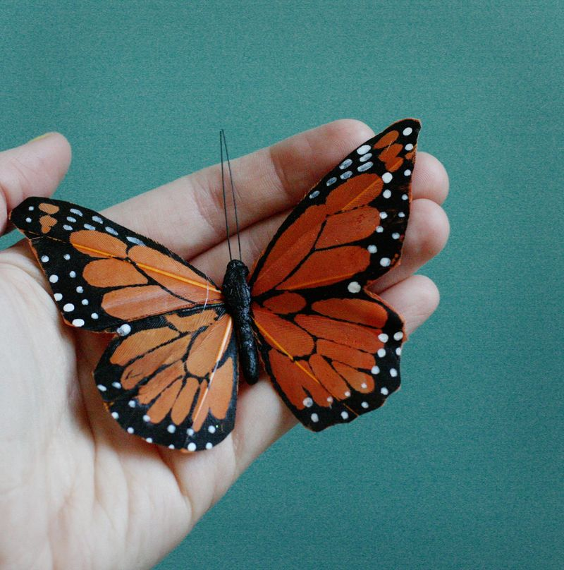 Orange feather butterfly