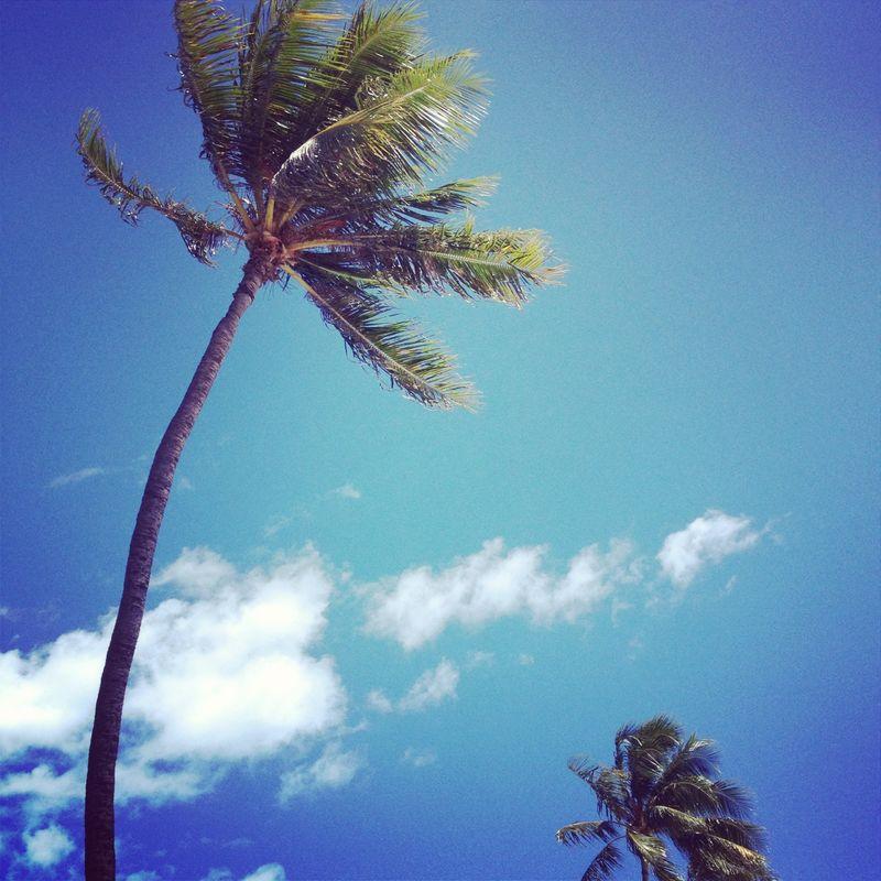 Insta Hawaii on Spiegeling 1