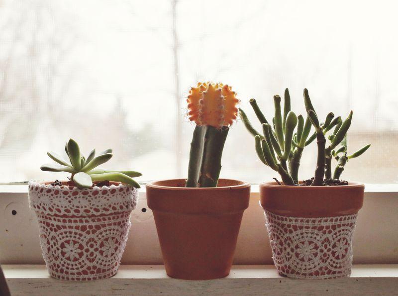 Kitchen window plants