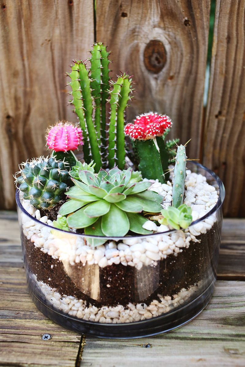 Planting a simple catci garden www.abeautifulmess.com