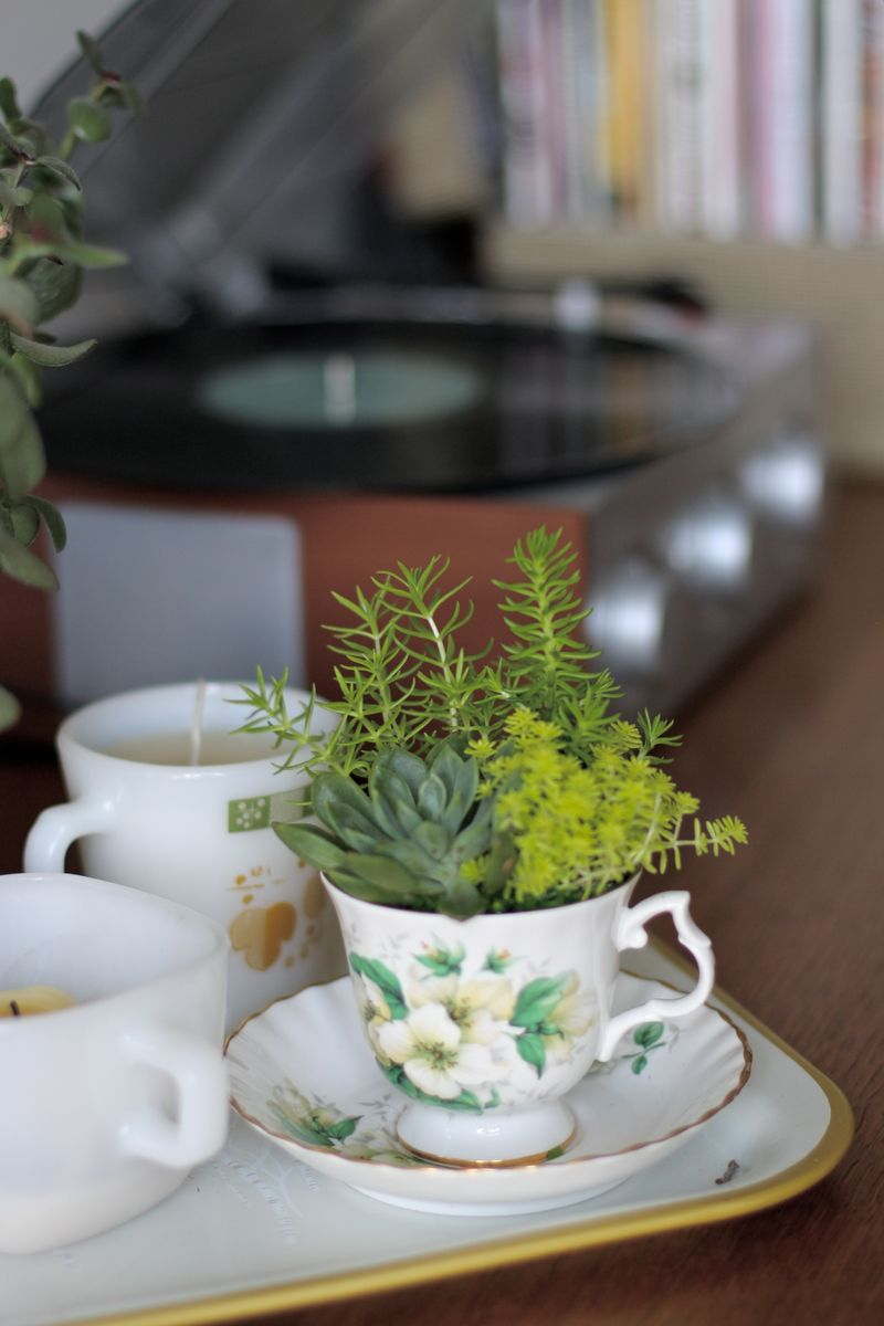 Lovely teacup succulents