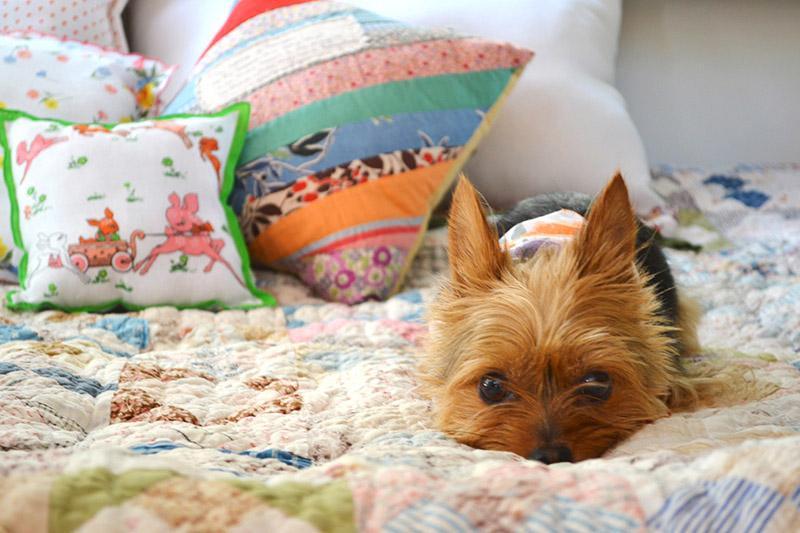 Cutest pup