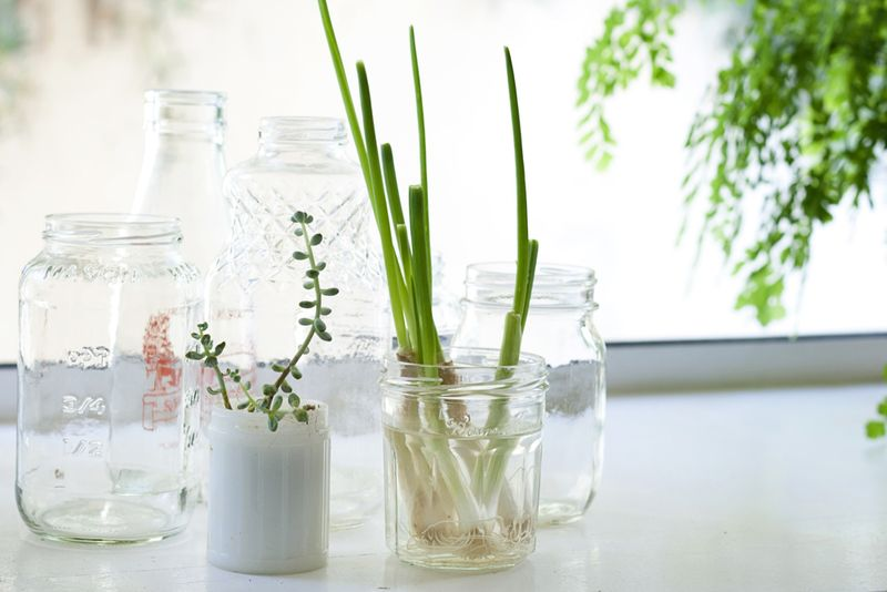 Little plants in the window