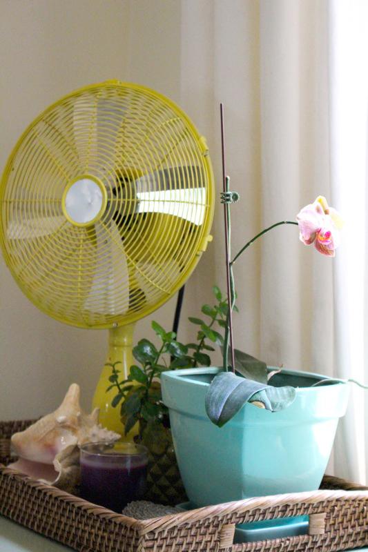 That yellow fan!
