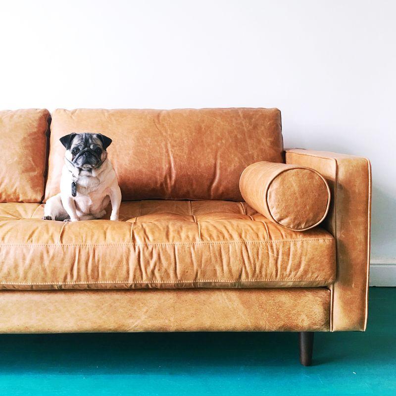 Suki loves the new sofa!