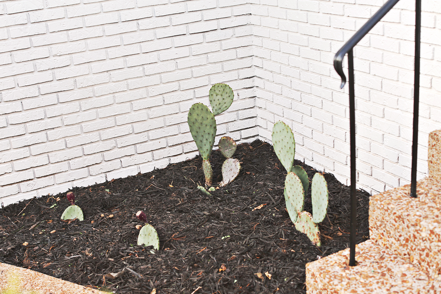 Outdoor Cacti Beds