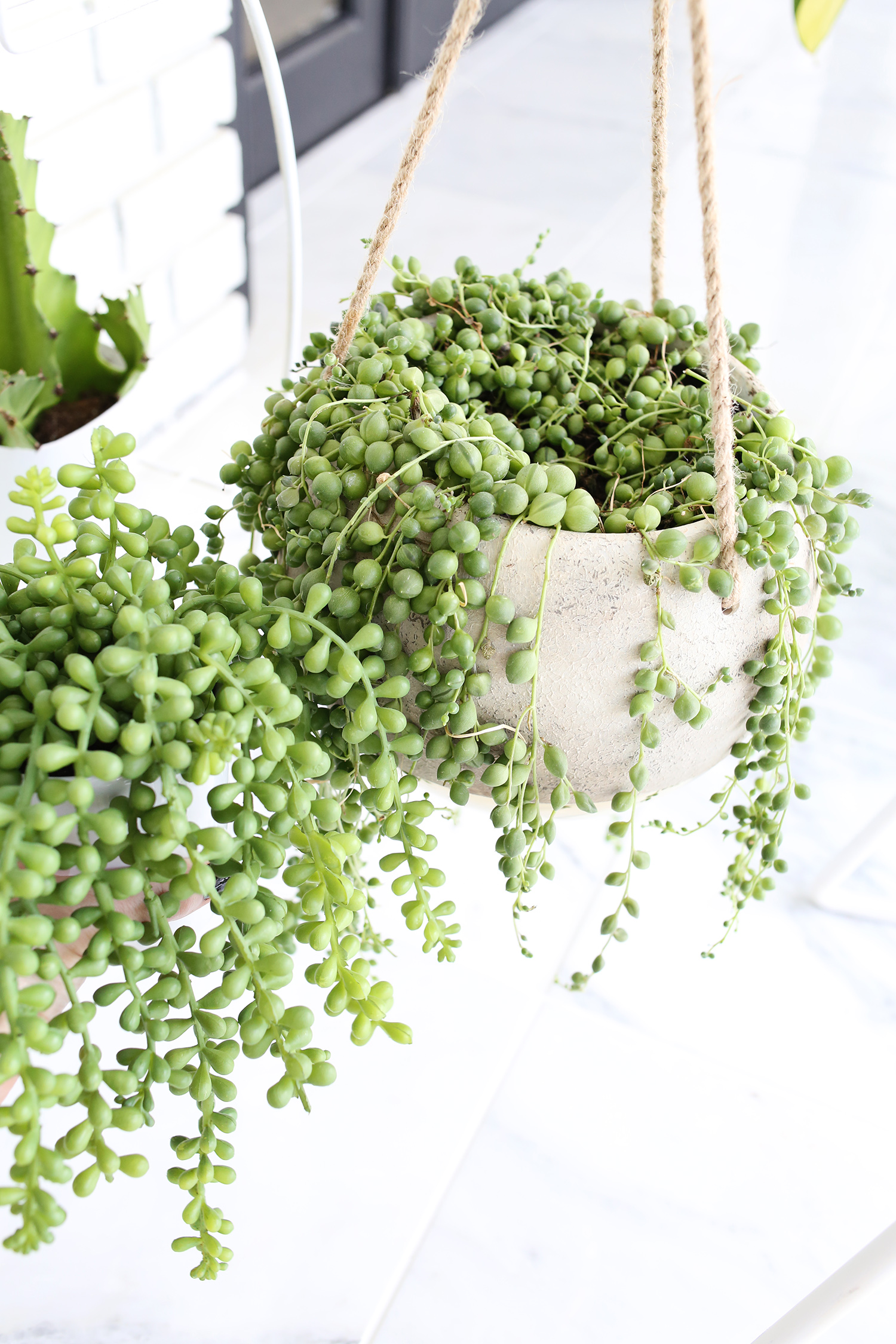 Are You Faux Real? How to Find the Most Convincing Faux Plants! - A Indoor House Plant String Of Pearls Html on succulents string of pearls, golf string of pearls, flower string of pearls,